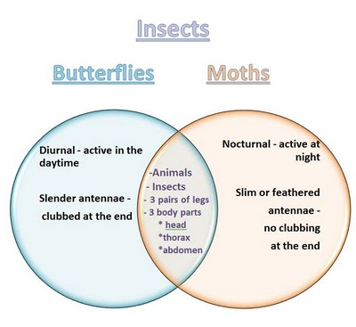 Describe the differences between complete and incomplete metamorphosis ...